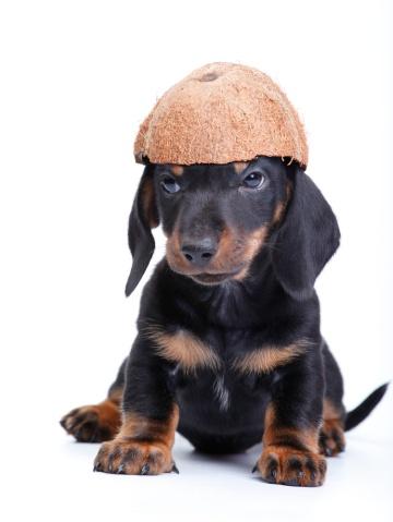 Coconutoilanddoghotspots-1.jpg